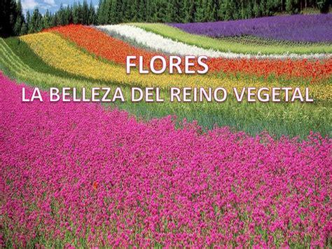 FLORES, LA BELLEZA DEL REINO VEGETAL