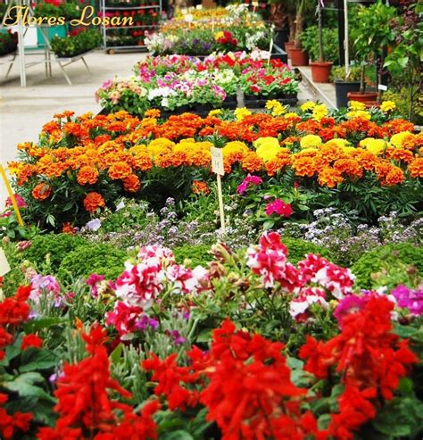 Flores Losan. Floristería   vivero en Collado Villalba