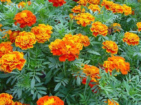 Flores mais belas da natureza   MundodasTribos – Todas as ...