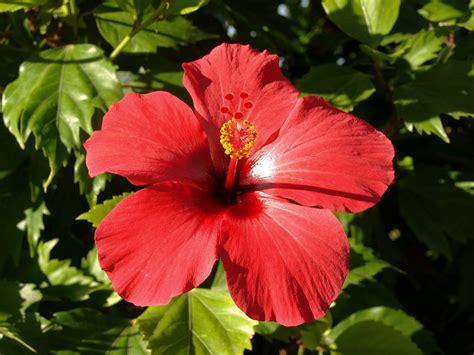 Flores Medicinais – Conheça suas Diversas Propriedades ...