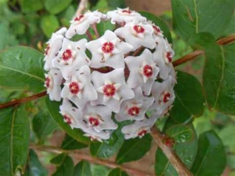 Flores ornamentales con sus nombres   Imagui
