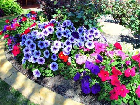 Flores para jardines exteriores | Mundojardineria.info
