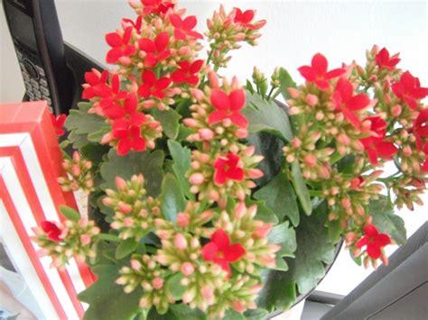 Flores pequeñas con nombre - Imagui