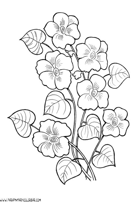 Flores pintar - Imagui