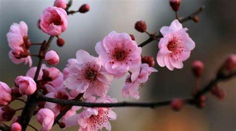 flores primavera ideas decoracion fiesta | MONTSE ANTARES ...