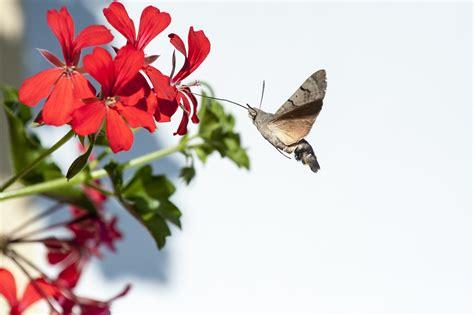 Flores que Atraem Beija flor e Borboletas | Blog Giuliana ...