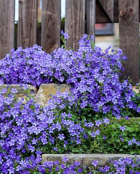 Flores que necesitan poco sol | Blog Elangreen