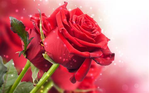 Flores Rojas   Imagen de dos hermosas Flores Rojas | Fotos ...