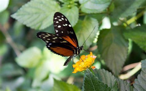flores verdes hojas insectos mariposas de movimiento fondo ...