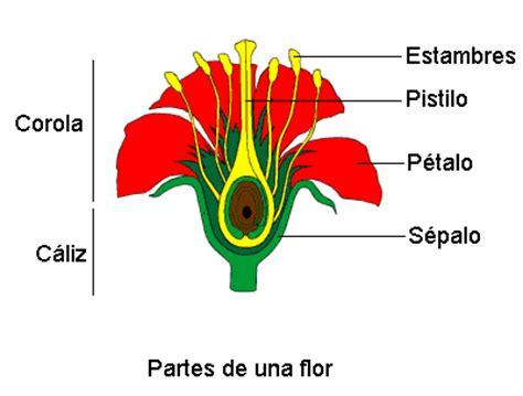 flores y fruto