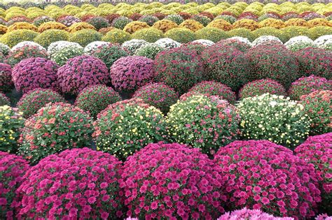 Flores y Plantas de Otoño   FLORISTERIA ONLINE BARCELONA ...
