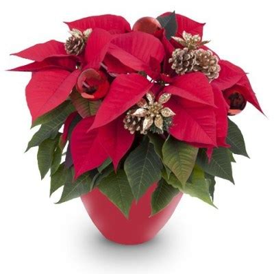 Floristeria online Barata - Comprar flores online DESDE 6 ...