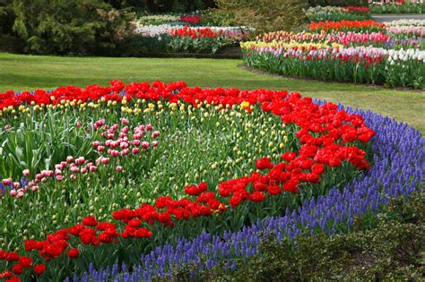 Flower Garden Free Stock Photo   Public Domain Pictures