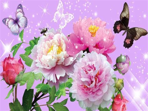Flowers and Butterflies   yorkshire_rose Wallpaper ...