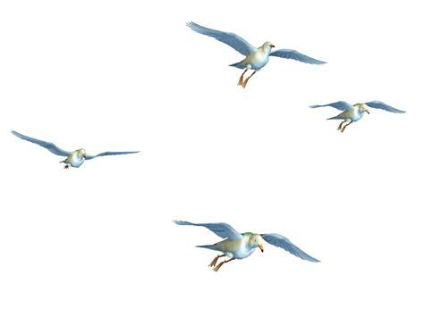 Flying Bird Png