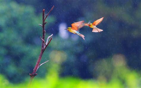 Flying Birds HD Desktop Background Wallpapers 11749 ...