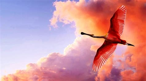 Flying Birds HD Picture Wallpapers 11689 - Amazing Wallpaperz