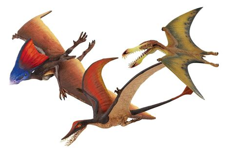 Flying Dinosaur Collection