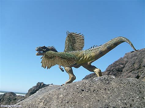 Flying Dinosaur Pictures   Freaking News