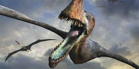 Flying Pterosaurs Were As Big As It Gets, Study Finds ...