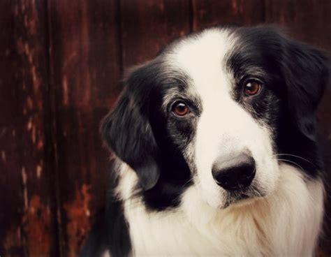 Fobia a los perros: cómo superarla. El Prado Psicólogos.