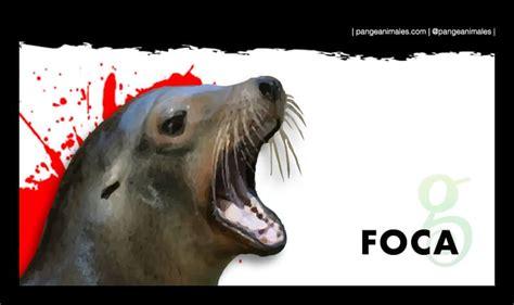 Foca: Información, aspecto, qué comen, tipos y hábitat ...