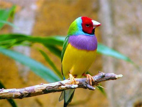 FONDITOS: Mira mis Colores - Animales, Pájaros, mascotas, aves