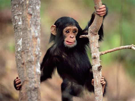 FONDITOS: Whats up   Animales, Monos, mascotas, primates ...