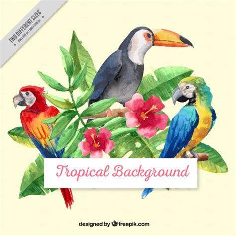 Fondo de aves tropicales de acuarela con hojas | Descargar ...