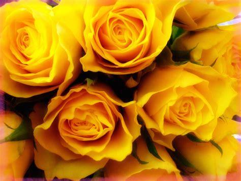 Fondo de Pantalla Con Fotos de Flores de Rosas | Imágenes ...