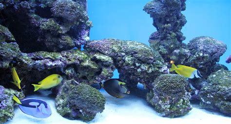 Fondo de Pantalla de Acuario, Peces, Tropicales, Corales ...