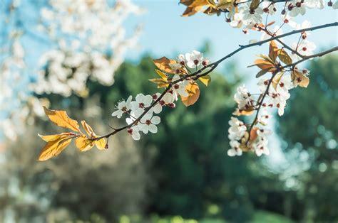 Fondo de Pantalla de Árbol, Rama, Flores, Floración, Hojas ...