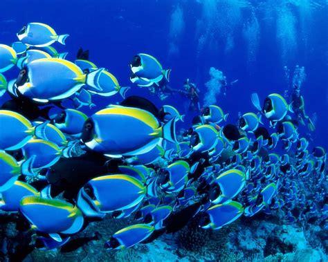 Fondo de peces de colores