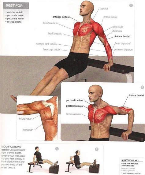 fondo triceps en banco | Entrenamiento | Pinterest