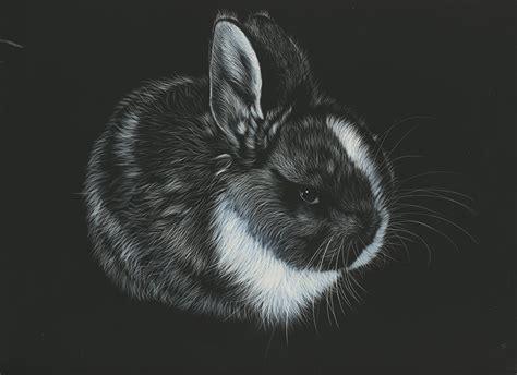 Fondos de Pantalla Conejo Dibujado En blanco y negro Fondo ...