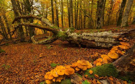 Fondos de pantalla España, País Vasco, otoño, árboles ...