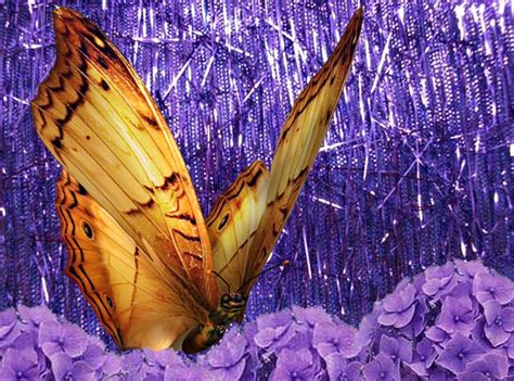 Fondos de pantalla mariposas en movimiento - Imagui