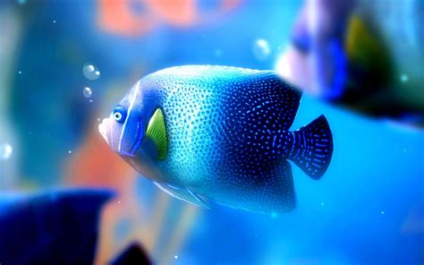 Fondos de peces