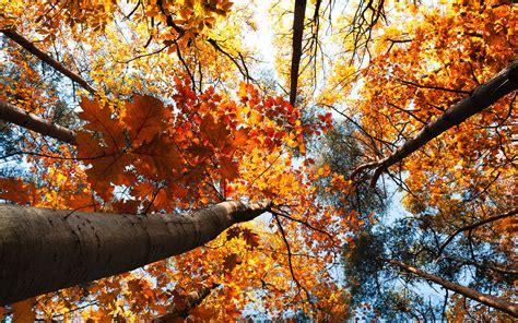Fondos Otoño, wallpapers autumn, fondos de pantalla de otoño