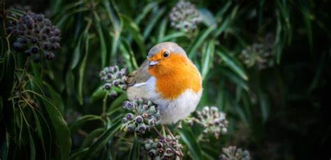 Food for Wild Birds, Wild bird food, bird seed, bird foods ...