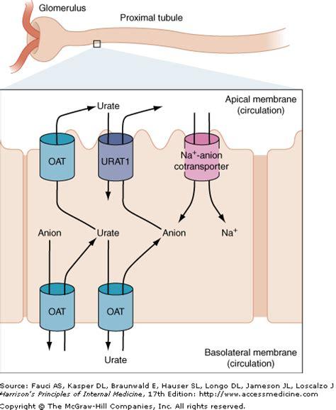 Formula acido urico   las nueces para el acido urico acido ...