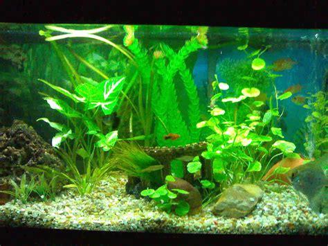 foro de peces y acuarios   Blog de Aj0 en acuarios.es   Blogs