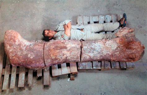 Fósiles del dinosaurio más grande de la historia se hallan ...