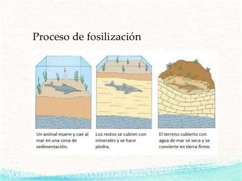 Fosilización