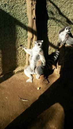 Foto de Zoo Castellar, Castellar de la Frontera: búho real ...
