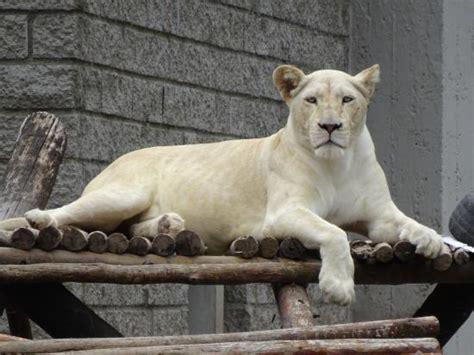 Foto di Zoo de Cordoba, Cordoba - TripAdvisor