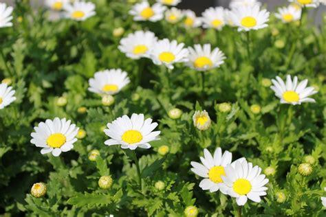 Foto gratis: Flores, Plantas, Flores Blancas   Imagen ...