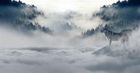 Foto gratis: Lobo, Lobos, Lobo De La Nieve - Imagen gratis ...