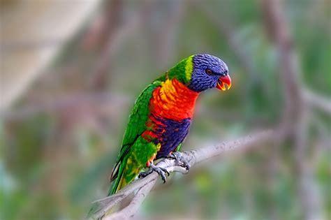 Foto gratis: Loro, Aves, Ramas De Aves - Imagen gratis en ...