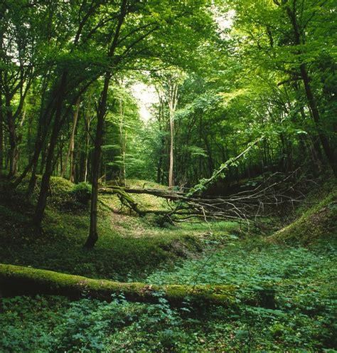 Foto gratis: Paisaje, Bosque, Verde, Naturaleza - Imagen ...